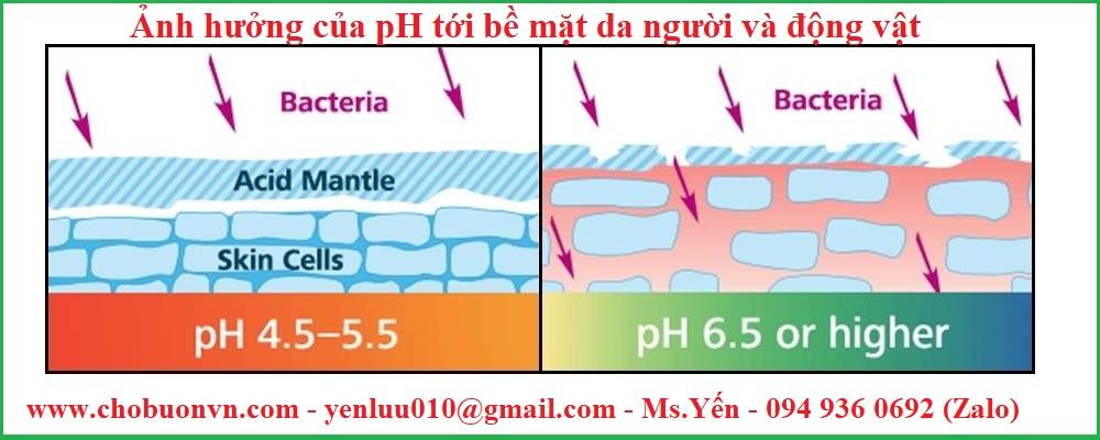 Ảnh hưởng của pH tới bề mặt da người và động vật