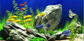 Tầm quan trọng của pH trong ao nuôi tôm cá