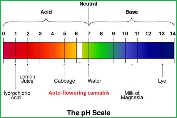 Thang pH nước